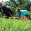 Rice planting season in Sapa