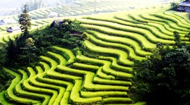 Lao Cai expects one-millionth tourist by October end